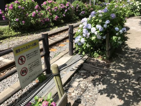 Photo spot of Enoden and hydrangea