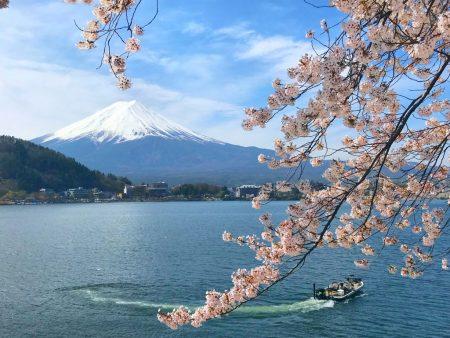 Mount Fuji and cherry blossoms in Ubugayasaki