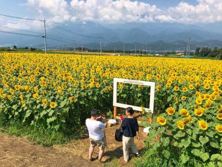 Akeno Sunflower Festival Field No.3