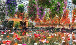 Begonia garden in Nabana no Sato.