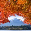 Mt.Fuji & autumn leaves at lake Kawaguchiko
