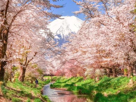 Cherry blossoms and Mt.Fuji at Omiyabashi bridge in Oshino Hakkai
