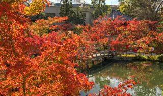 Autumn leaves in Eikando temple