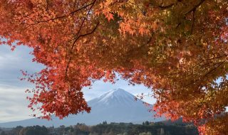 Autumn leaves and Mt.Fuji by iPhone XS Max