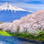 cherry blossoms and Mt.Fuji at Ryuganbuchi 2019