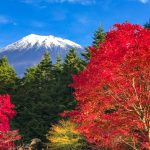 Autumn leaves and Mount Fuji in Nishiusuzuka.