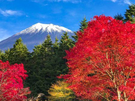 Autumn leaves and Mount Fuji in Nishiusuzuka.