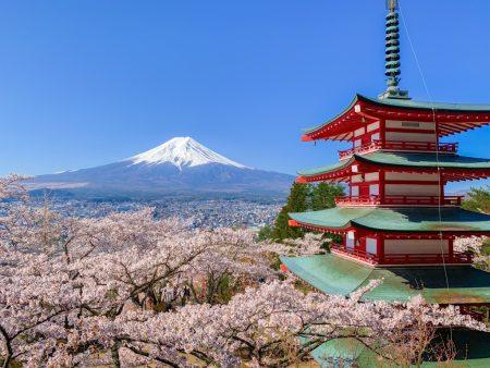 Cherry blossoms and 5 story pagoda in Arakurayama Sengen Park 2019
