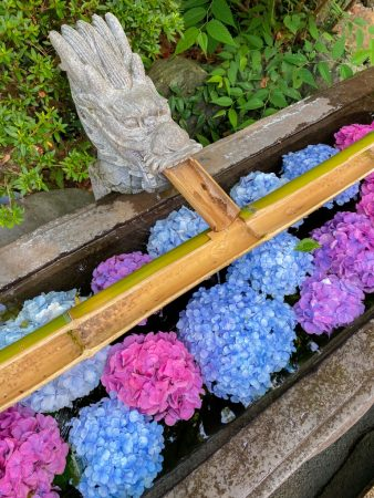 Chozuya filled with colorful hydrangea in Enoshima island