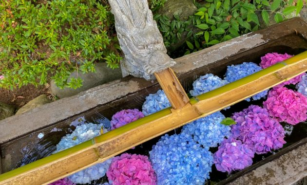 Chozuya filled with colorful hydrangea in Enoshima island