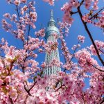 Kawazu Zakura and Tokyo Skytree.